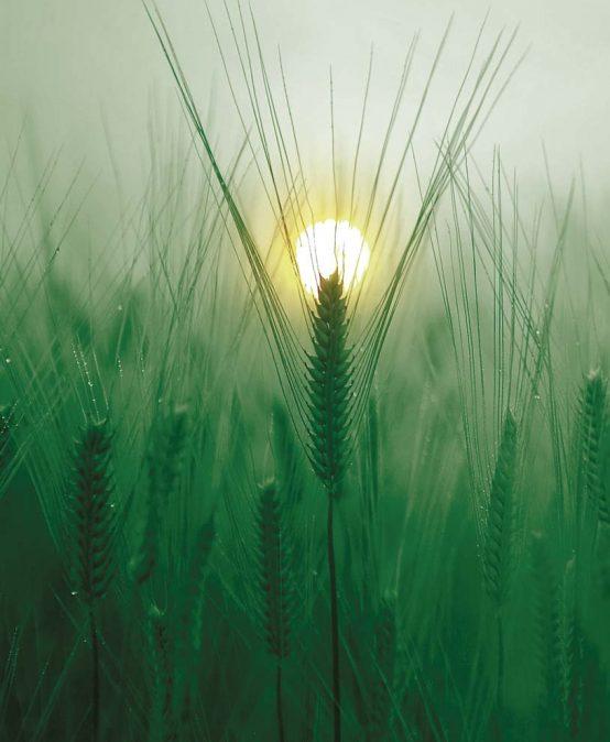 XXII Semana Acadêmica do Curso de Agronomia