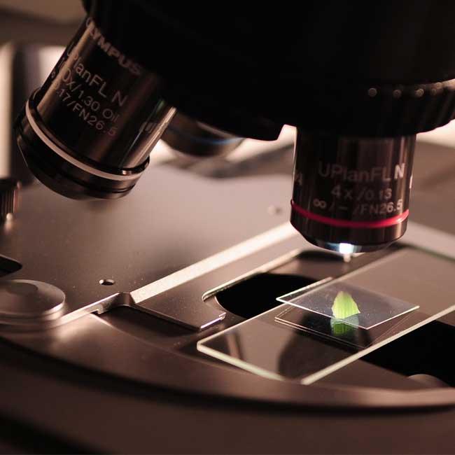Biomedicina valorizada