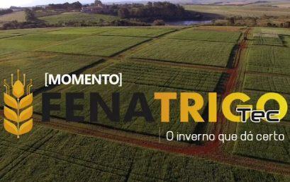 Momento Fenatrigo Tec