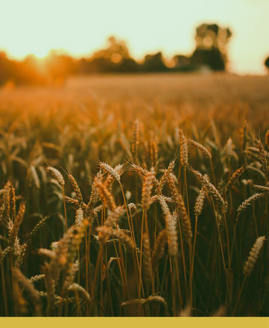XXIV Semana Acadêmica do Curso de Agronomia